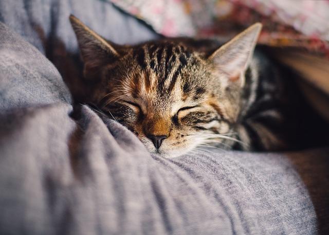 育毛と睡眠の考え方!ゴールデンタイムの意味と活用とウソ!?